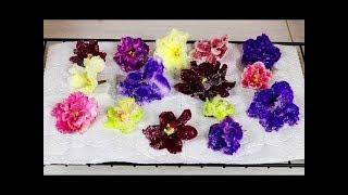Засахаренные цветы для украшения тортов и пирожных. Как красиво украсить торт