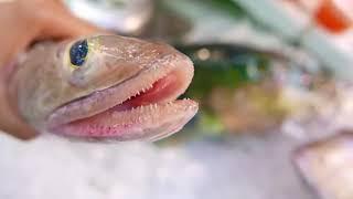 Япония Морепродукты  -  Рыба Змееголов Обработка и Приготовление