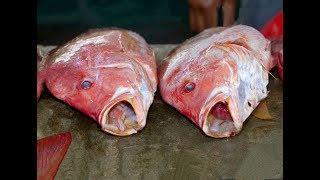 Япония Морепродукты - Разделка и Приготовление  Рыбы  Люциана Японским Шеф-Поваром