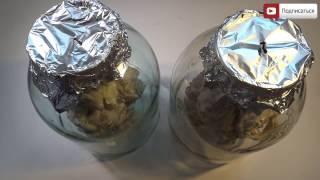 Шашлык в банке. Как замариновать и пожарить шашлык из свинины в банке в духовке